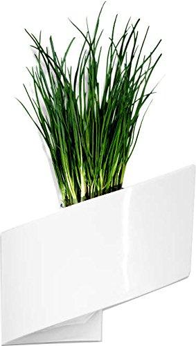 pot mural pour plante interieur