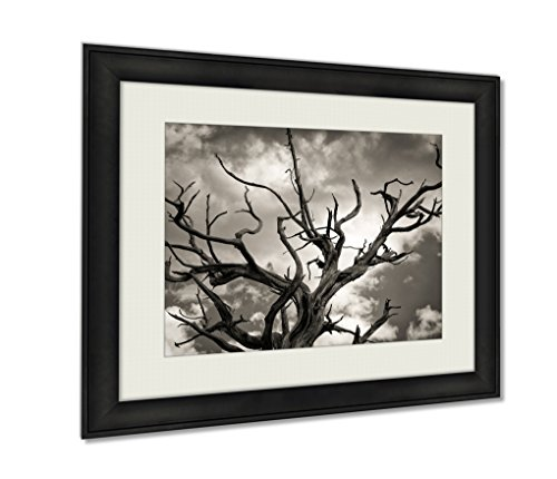 Tree Photo Dead (Ashley Framed Prints Dead Tree Wall Art Decor Giclee Photo Print In Black Wood Frame, Soft White Matte, Ready to hang 16x20 art)