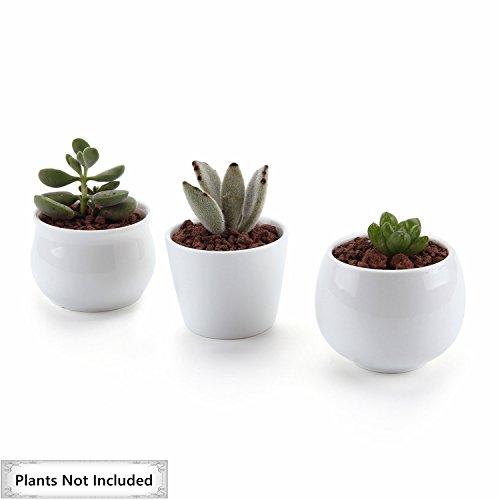 T4U Ceramic Collection succulent Container product image