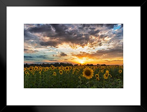 (Poster Foundry Sunflower Field Sunset Tuscany Italy Landscape Photo Art Print Matted Framed Wall Art 26x20 inch)