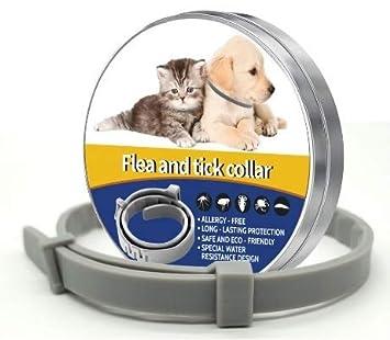 Star Quality Supplies Collar para pulgas y garrapatas. Silicona Gris para Gatos y Perros pequeños. Proporciona 8 Meses de protección Continua. Talla ...
