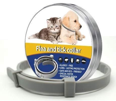 Star Quality Supplies Collar para pulgas y garrapatas. Silicona Gris para Gatos y Perros pequeños. Proporciona 8 Meses de protección Continua. Talla única.