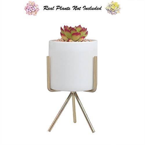 Succulent Planter Pot with Stand, 5.7 H Modern Minimalist Indoor Geometric Metal Holder with White Round Ceramic Flower Pot for Succulents Air Plants Small Cactus Herb Fern Bonsai by Ebristar -Medium