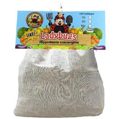 18,000 Live Ladybugs - Good Bugs - Ladybugs - Guaranteed Live Delivery! by Bug Sales