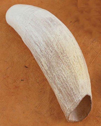 Sperm Whale Tooth - Sperm Whale Tooth Replica