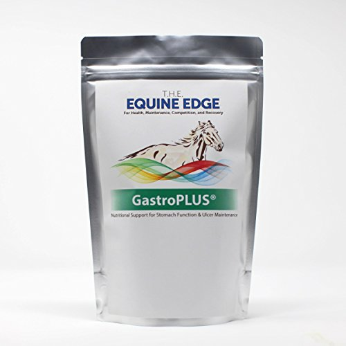 GastroPLUS - Digestion & Ulcer Supplement for Horses, 30 Servings by T.H.E. Equine Edge