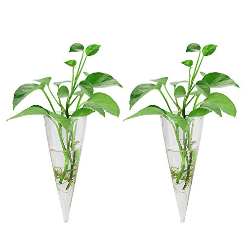 Accmor 2 Pack Wall Hanging Plant Terrarium Glass Planter (Cone-Shaped) by accmor
