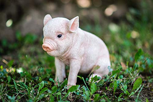 ting Baby Pig, 6