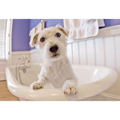 85%OFF Doggie Washer