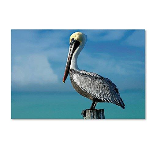 Trademark Fine Art Pelican by Mike Jones Photo, 22x32-Inch Canvas Wall (Jones Photo Art)