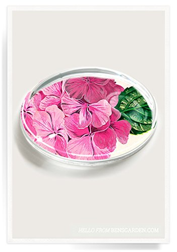 - Pink Hydrangea Botanical Crystal Oval Paperweight