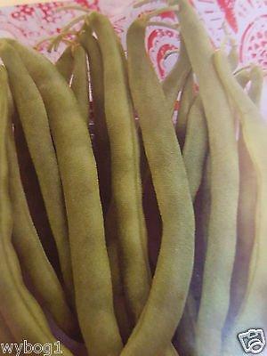 Kentucky Wonder Bush Beans NoN GMO 50+ Seeds (Phaseolus Vulgaris) (Wonder Beans Kentucky Bush)
