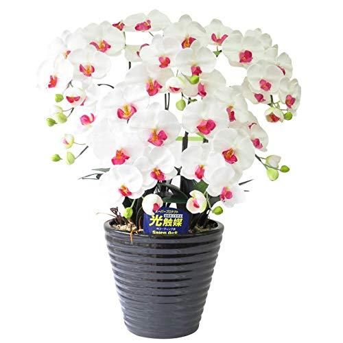 胡蝶蘭 光触媒 造花 お祝い 花 開店 祝い 開業 引っ越し 祝い 花 ギフト プレゼント (白赤) B06Y5K218K 白赤