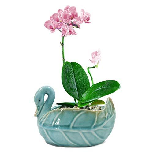 Dahlia Decorative Swan Handmade Ceramic Succulent Planter/Plant Pot/Flower Pot/Bonsai Pot