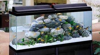 Amazon Bio Wheel 55 Gallon Kit With Led Light Aquarium