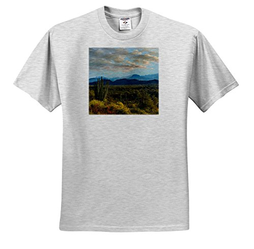 Danita Delimont - Deserts - Organ Pipe Cactus National Monument and Ajo Mountains, Arizona - T-Shirts - Adult Birch-Gray-T-Shirt Large (TS 258765 20)