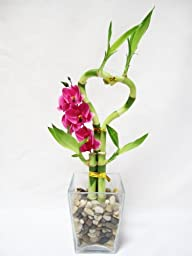 9GreenBox - Live Heart Style Lucky Bamboo Arrange w/ Glasses Vase Pebble Silk Orchid