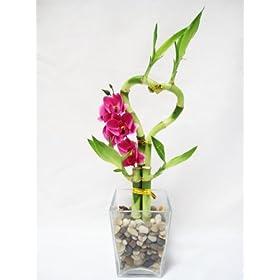 Heart Style Lucky Bamboo Arrange Vase Silk Orchid