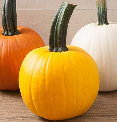 David's Garden Seeds Pumpkin Sunlight D3910 (Yellow) 25 Hybrid Seeds