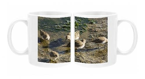 Photo Mug of Least Sandpipers - feeding in mud as tide recedes