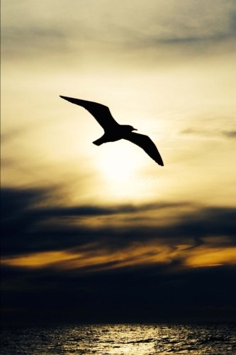 A Seagull Silhouetted by a Golden Sunset Journal: 150 Page Lined Notebook/Diary (Silhouetted Bird)