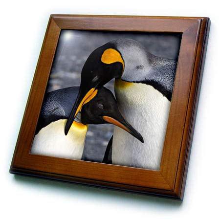 - 3dRose Danita Delimont - Penguins - Antarctica, South Georgia is. St. Andrews Bay, Pair of King Penguins - 8x8 Framed Tile (ft_312583_1)