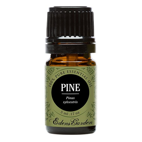 Edens Garden Pine 5 ml 100% Pure Undiluted Therapeutic Grade GC/MS Certified Essential Oil
