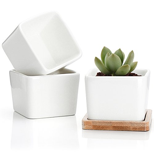 Greenaholics Succulent Plant Pots - 3.54 Inch Ceramic Small Square Planters, Cactus Plant Pots, Flower Pots with Drainage Hole, Bamboo Tray, Set of 3, White (Square Planter Pots)