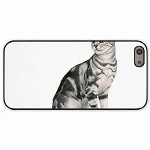 iPhone 5 5S Black Hardshell Case kitten tabby sit Desin Images Protector Back Cover