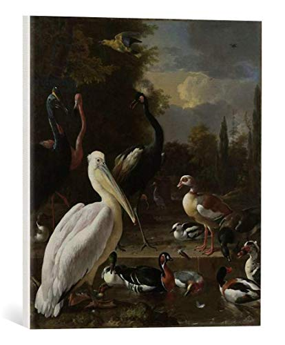 kunst für alle Canvas Print: Melchior de Hondecoeter Pelican Other Birds Near Pool Known as 'The Floating... Fine Art Print, Canvas on Stretcher, Ready to Hang Wall Picture, 15.7x17.7 inch / 40x45 cm