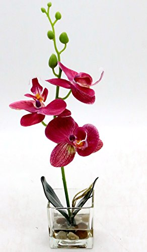 Leeman Artificial Lifelike Real Touch Flowers Arrangement Phalaenopsis Bonsai Orchid Miniascape Home Decoration Holiday Gift (Pink - Plant Iris Silk