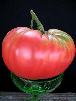 Tomato Brandywine Pink Great Garden Heirloom Vegetable by Seed Kingdom Bulk 1/4 Lb Seeds by seed kingdom