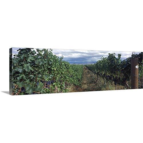 Estate Vineyard Cabernet - GREATBIGCANVAS Gallery-Wrapped Canvas Entitled Basel Cellars Estate Winery, Walla Walla, Washington State by 60