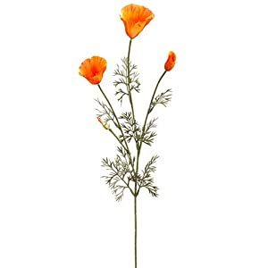 "28.5"" California Poppy Spray x3 Orange Gold (Pack of 12) 116"