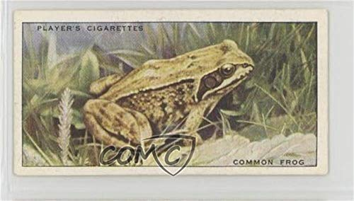 Common Frog (Trading Card) 1939 Player
