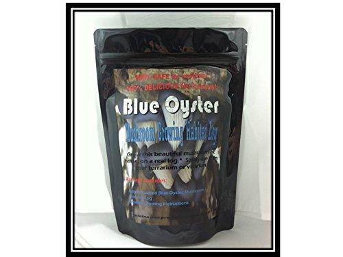 blue-oyster-mushroom-growing-habitat-log-pre-inoculated-kit-organic