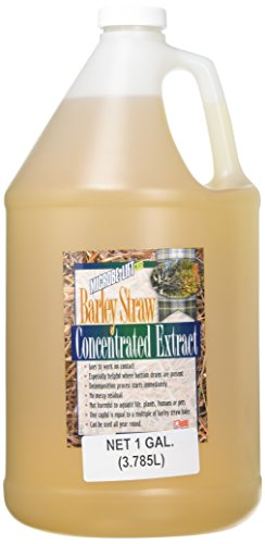 (Ecological Labs AEL20120 Microbe Lift Barley Straw Extract Pond Conditioners for Aquarium, 1-Gallon)