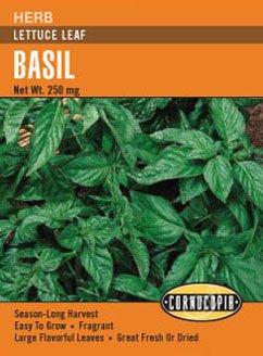 Basil Lettuce Leaf (Basil Lettuce Leaf)