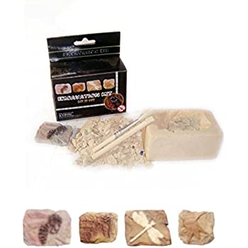 Small Fossil Excavation Kit