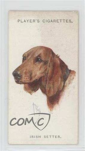 - Irish Setter Ungraded COMC Good to VG-EX (Trading Card) 1929 Player's Dogs' Heads by Arthur Wardle - Small #30