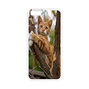 CHENGUOHONG Phone CaseGrumpy Cat,Because Cats For Apple Iphone 6 Plus 5.5 inch screen Cases -PATTERN-2