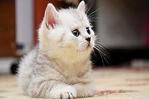 """novvway Cute cat-dr1009personalizado bienvenida Felpudo 23.6""""(L) X 15,7(W) antideslizante"""