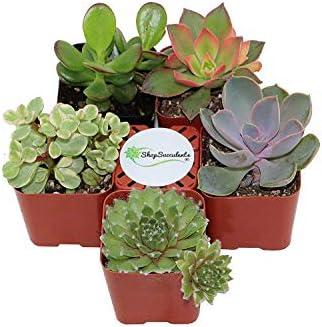 patio, lawn, garden, gardening, lawn care, plants, seeds, bulbs,  cacti, succulents 10 discount Shop Succulents   Unique Collection of Live Succulent Plants deals