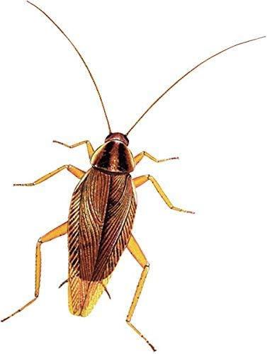 Protect Home - Insecticida Descarga Total, automático, antiguo Solfac, 150ml (1 unidad): Amazon.es: Jardín