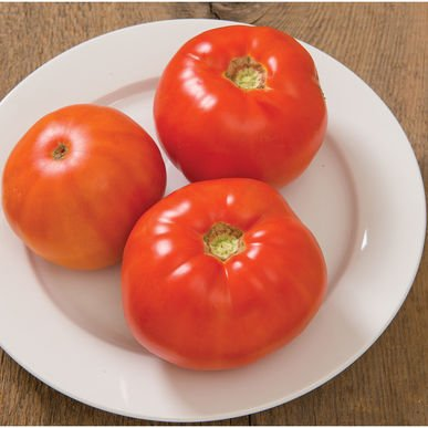 David's Garden Seeds Tomato Beefsteak Skyway (Red) 25 Organic Hybrid Seeds