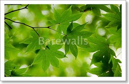barewalls Green Maple Leaves Background Paper Print Wall Art (10in. x 15in.) Barewalls Leaf
