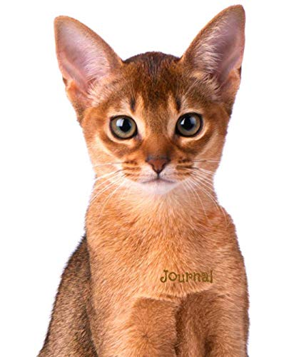 Journal: Abyssinian Kitten Notebook