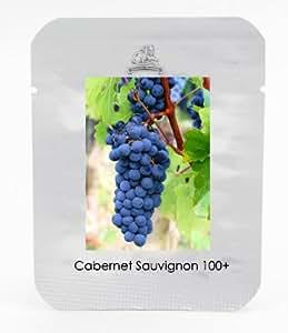 1 Pack Profesional, 100 semillas / paquete, semilla de uva Cabernet Sauvignon Hardy Planta de semillero # NF470