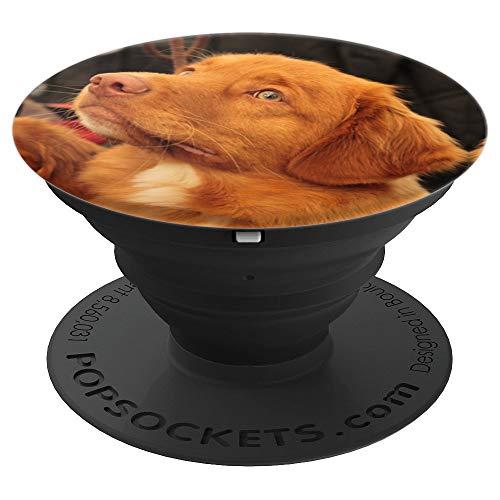 Nova Scotia Duck Tolling Retriever Dog Puppy Red Face - PopSockets Grip and Stand for Phones and ()