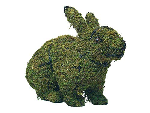 (Hopping Rabbit 17